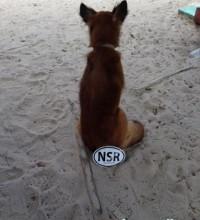 NSR-dog